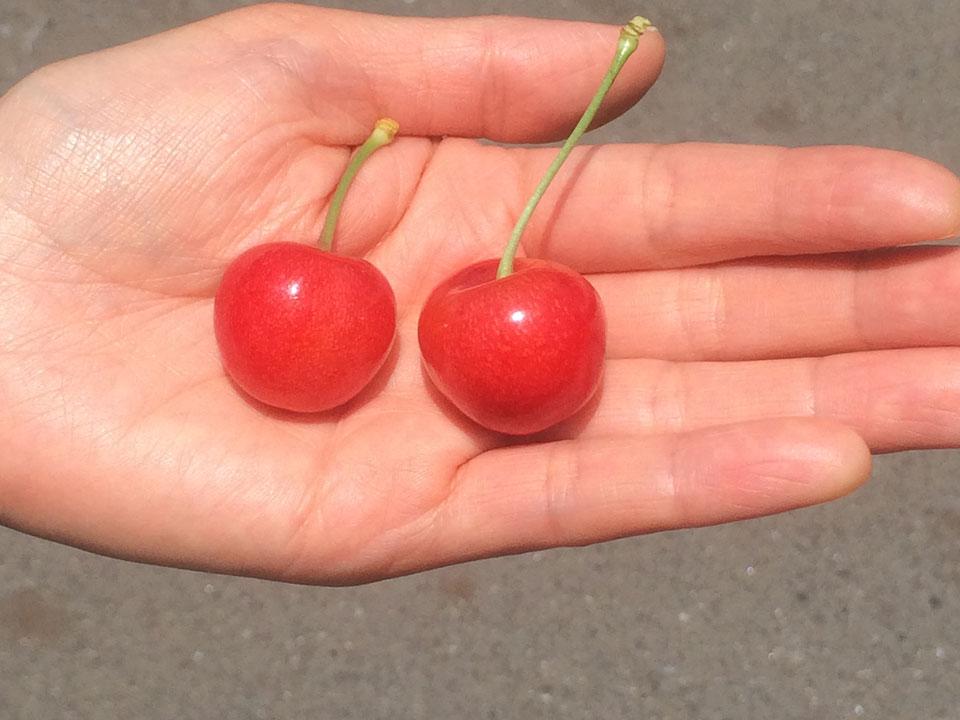 cherry0622_top