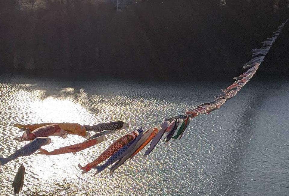 赤谷湖鯉のぼり2