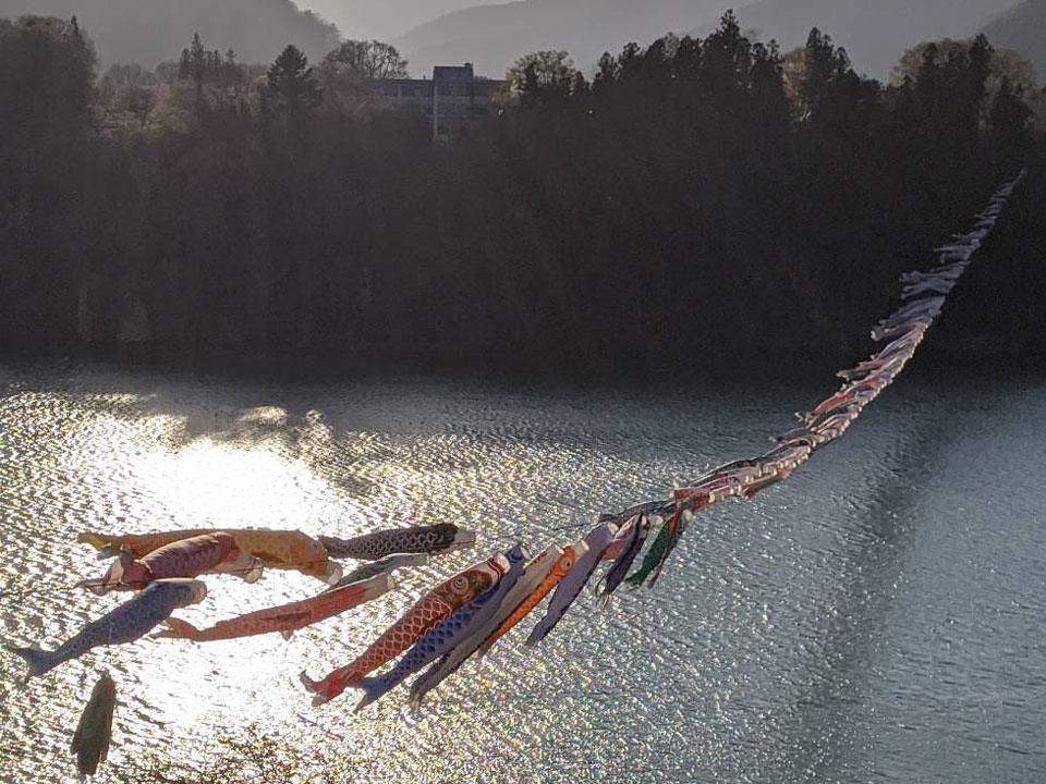赤谷湖鯉のぼりtop
